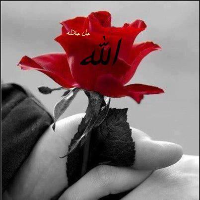 Allah rose 3