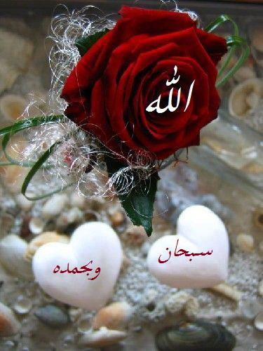 Allah rose5