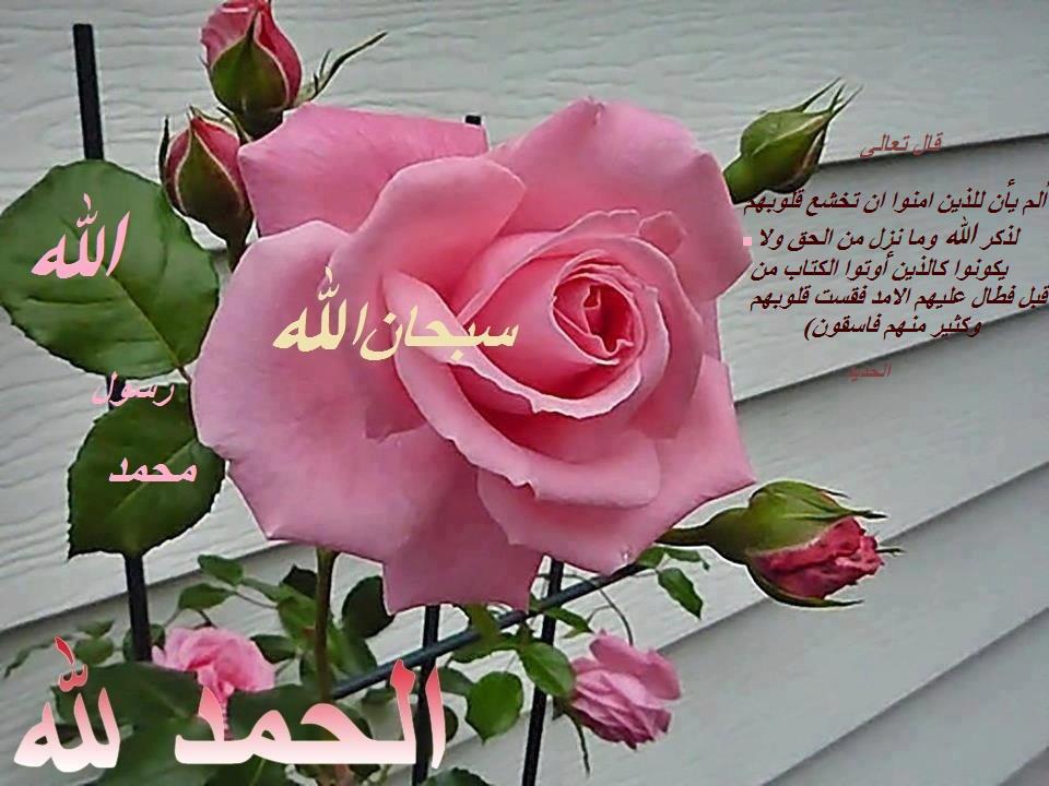 Allah rose besar