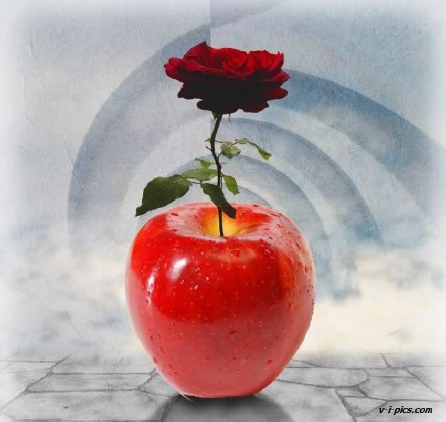 Apel dan rose
