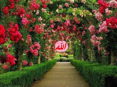 Kebun Allah